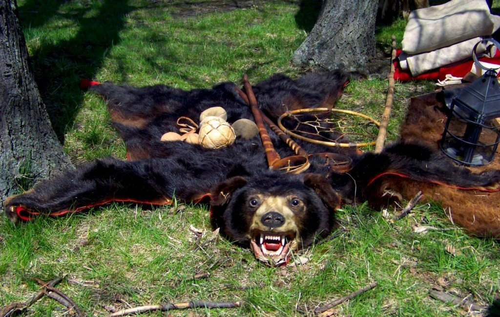 The Definitive Bear Taxidermy Primer