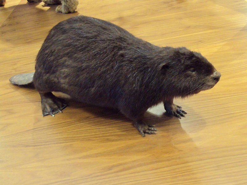 Diy taxidermy we all have to start somewhere taxidermylifestyle throughout your research you will read a lot of descriptions on what is a taxidermist as a start you will need to figure out your commitment to the art solutioingenieria Images